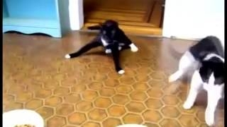 cats after anesthesia PSY ��� ����� ����������� gentleman psy ����� �����������
